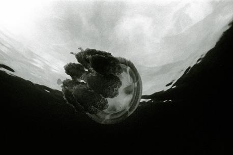 stingless biosphere
