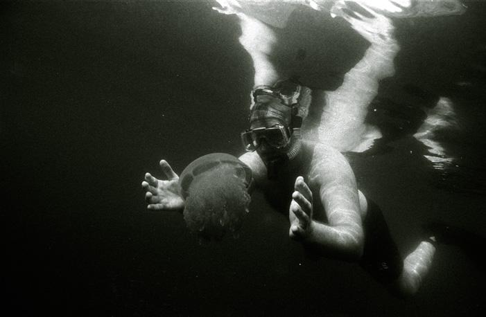 jellyfishlake003.jpg
